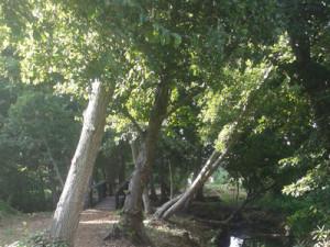 Diep-River-sts
